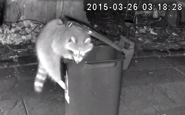 Raccon with green bin - Iconica Communications