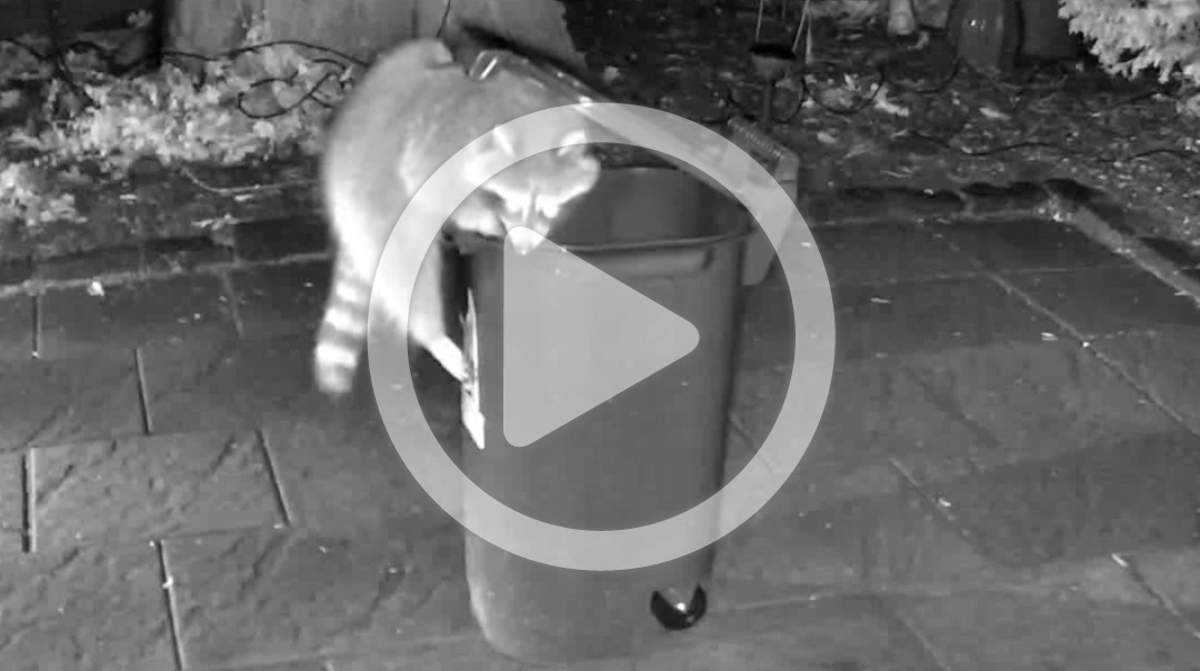 Toronto Green bin 2.0 viral video